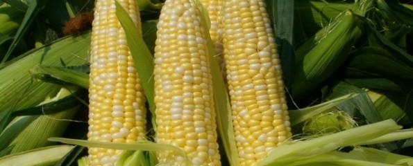 Россия может запретить поставки кукурузы из США