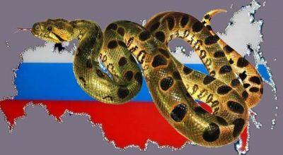 Американская анаконда против русского медведя