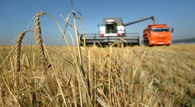 РФ готова увеличить поставки зерна в Японию до пяти миллионов тонн в год