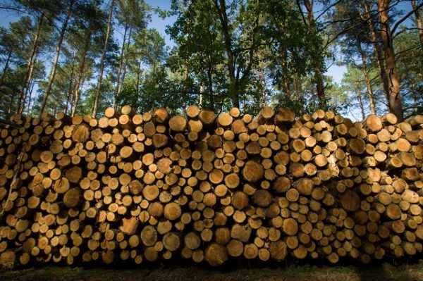 Безвиз в обмен на оставшиеся богатства: Украина отдает леса за бесценок