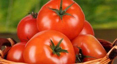 Россия озвучила условия поставки томатов из Турции