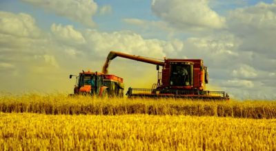 Небывалый урожай выйдет боком аграриям и потребителям