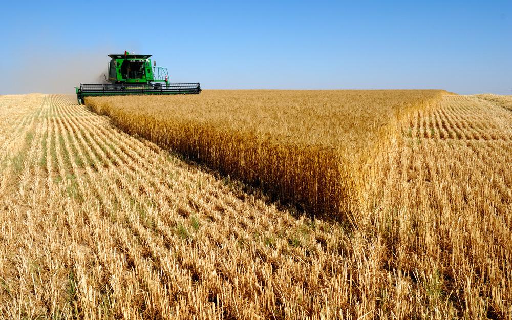 Мировое производство зерновых уменьшится из-за неблагоприятной погоды в России