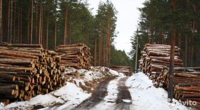 Правительство решило легализовать незаконно застроенные лесные участки
