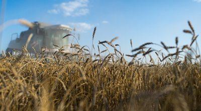 Экспорт российского зерна рухнул на 23%