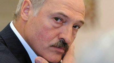 Почему Лукашенко поочередно бодает двух коров?