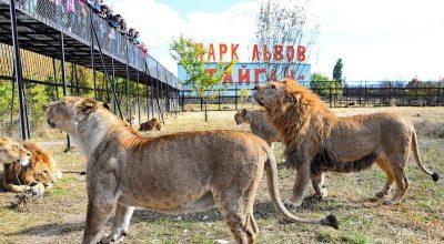 Крым – 2017. Львы против шакалов
