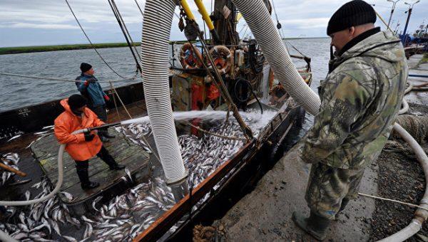 Улов растет вместе с ценами: почему покупать в России рыбу опасно и дорого