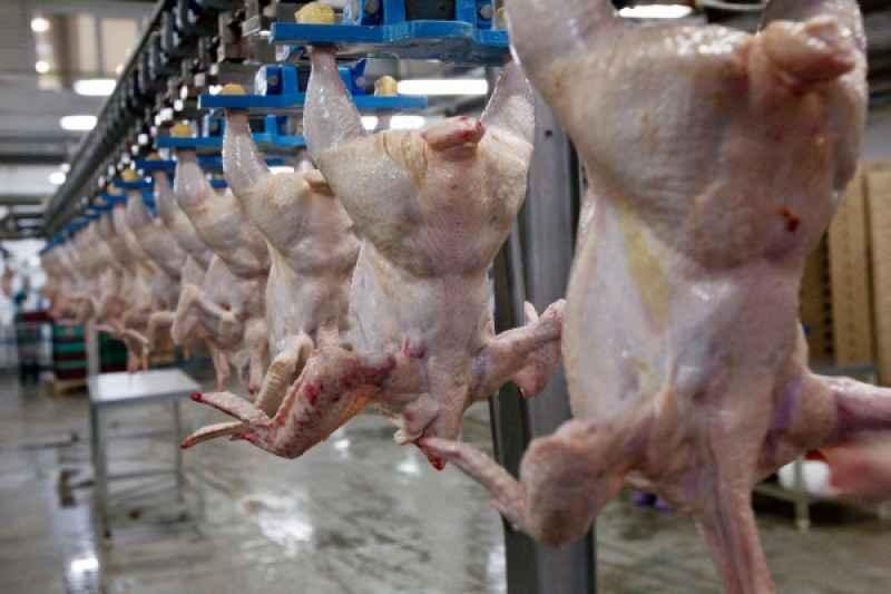 Куриное мясо в России оказалось опасным для здоровья
