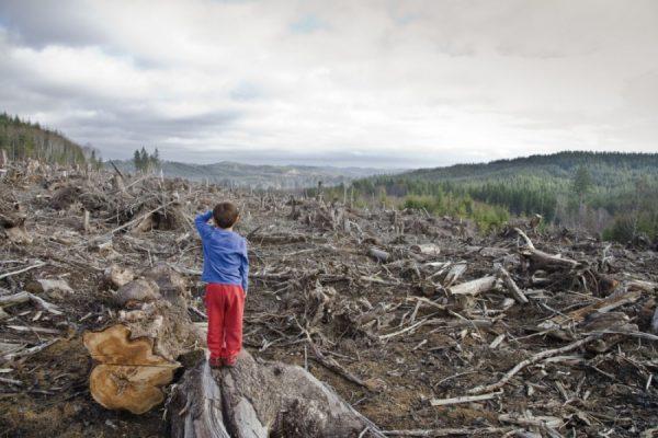 В самой «лесной» державе мира закончился лес