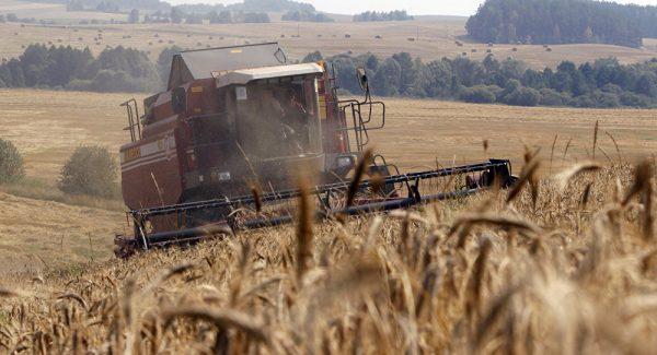 Россия потеснила США на рынке зерна
